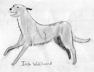 Here is Ben the Irish Wolfhound. He is a bit mean to Sasha in the ...